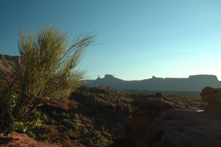 Nevada Ephedra in southern red rock evening scenery, scientific name ephedra nevadensis